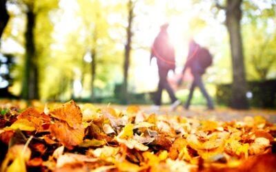 Efteråret er rette tidspunkt til efterårsbehandlinger