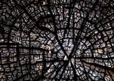 Træt hud er som årringe på et fældet træ