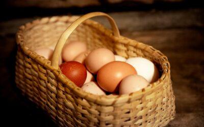 Alle æg i samme kurv