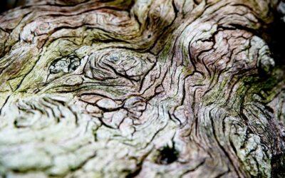Smuk struktur i træstamme