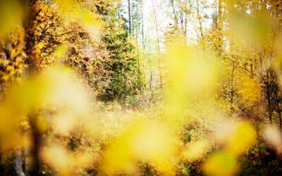 Efterår i skoven er et unikt farvespil
