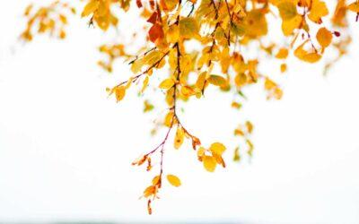 Skovsø og efterårsfarver