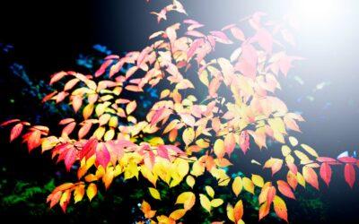 Smukke efterårsblade i farvefyrværkeri