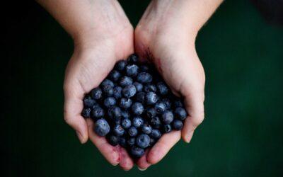 Friske blåbær