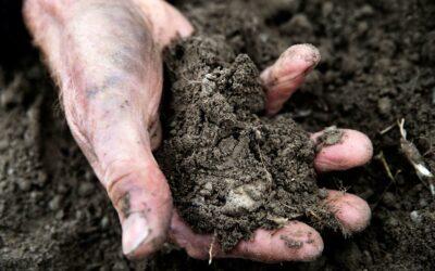 God dansk muld er en af grundpillerne i dansk landbrug