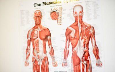 Billede af kroppens anatomi