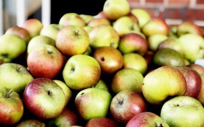 Man kan ikke få nok æbler