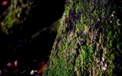 Grønt mos på træ