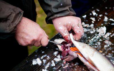 Fisk skal altid renset og alt blod skal fjernes