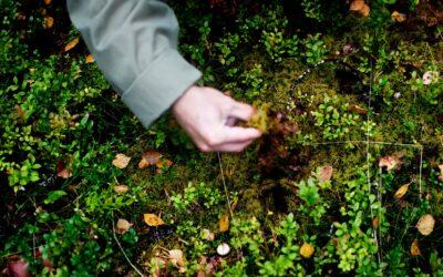 Skovbundet er en skatkammer af spiselige bær og grønt