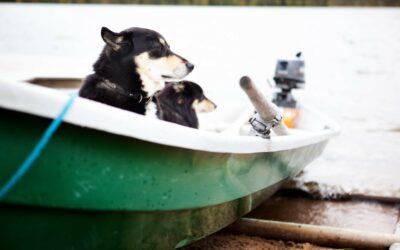 Hunde og sejlads
