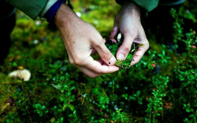 Picking herbs in the forest