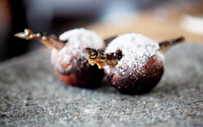 Æbleskiver ala Noma